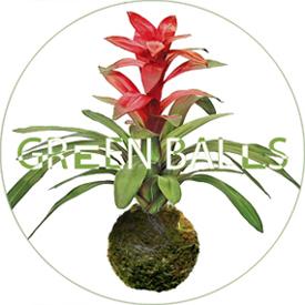 GREEN BALLS ( KOKEDAMAS )